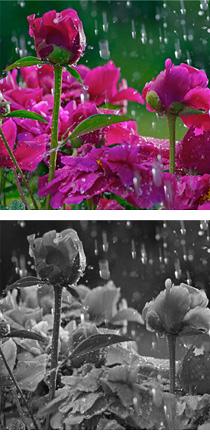 eaux florales
